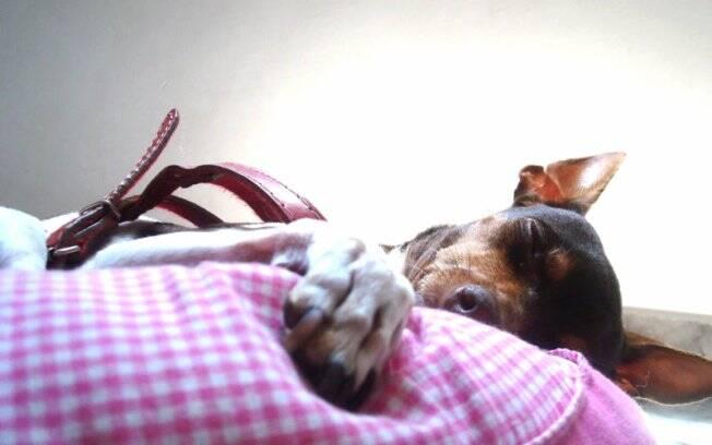 Maggie tira uma soneca: olhando assim, até parece um anjo